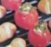 gegrillte Tomaten picture