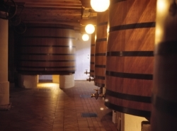 Wein: hervorragender Jahrgang 2011