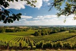 Authentische Weine aus dem Südwesten Frankreichs