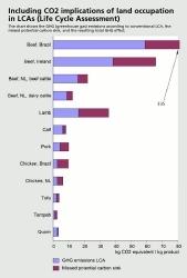 Studie: Rindfleisch ist ein Klimakiller