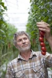 SanLucar stellt Tomatenkonzept vor