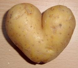 Kartoffelernte fällt knapp aus
