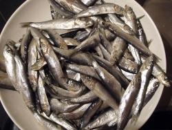 Fisch: Europa beschließt Fangquoten für 2014