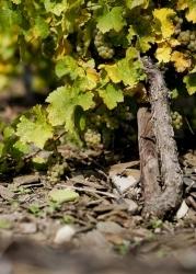 Weingut Albert Kallfelz siegt mit trockenem Mosel-Riesling