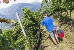 Frischer Wind: Neue Anlaufstelle für Weinliebhaber in Südtirol