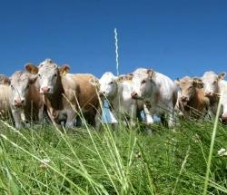Engagement: Block House hilft Landwirten in der Milchkrise