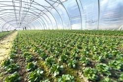 Stiftung Warentest: Schadstoffe in Feldsalat und Rucola gefunden