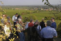 Pfalz: WeinWanderWochenende verbindet Weingenuss mit Bewegung
