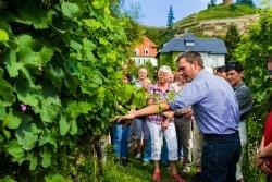 Sachsen: 46 Teilnehmer präsentieren sich bei den Tagen des offenen Weinguts
