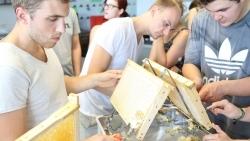 FH Münster: Studierende ernten eigenen Honig