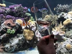 Sea Life Speyer: Weinprobe unter Wasser bietet besonderen Genuss