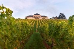 Seit 1720: Schloss Johannisberg feiert 300 Jahre Riesling
