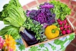 Slow Food Online-Event: Die  Ernährungswelt nach Corona