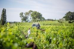 Rhône-Tal: Ernte 2020 liefert hochwertigen Jahrgang