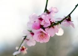 Pfälzer Mandelblüte: Mandel-Genuss aus der Box