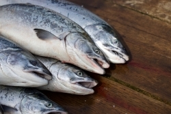 Marktcheck Verbraucherzentrale: Fisch aus Aquakultur zum Osterfest