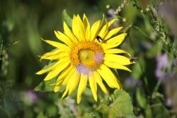 Für mehr Biodiversität: Iglo startet Initiative mit dem Netzwerk Blühende Landschaft