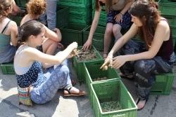 Ideenwettbewerb: Slowfood ruft Verbraucher zur Beteiligung auf