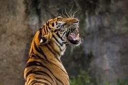 Zoo Frankfurt: Magistrat genehmigt gastronomischen Neubau