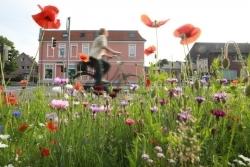 Biodiversität: Iglo lässt die Blumen blühen